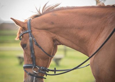 Levi Hunt Equine